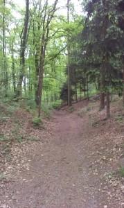Wandelend in de natuur vind je je pad, wandelcoaching helpt daarbij.